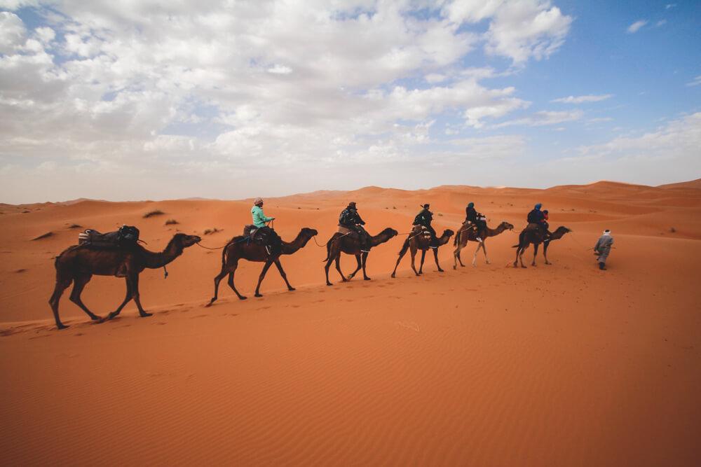 Kamele-Marokko-Merzouga-Sahara-Wueste-Tour