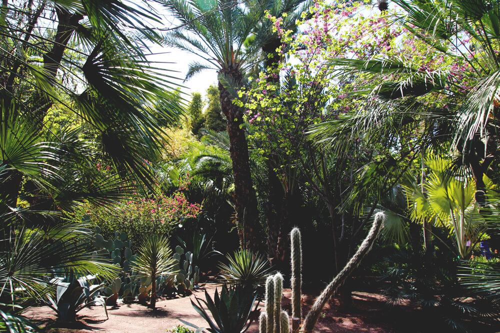 Yves-Saint-Laurent-Jardin-Majorelle-Marrakesch-Marokko-Garten
