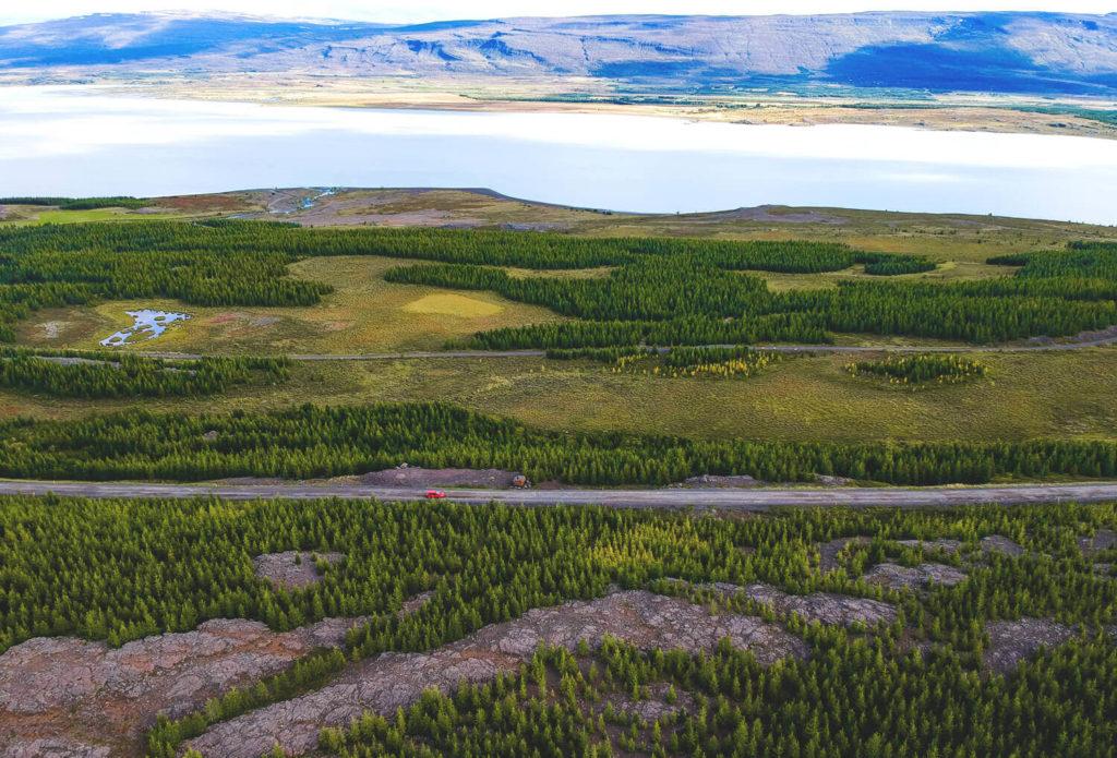 island-rundreise-osten-hallormsstadaskogur-1