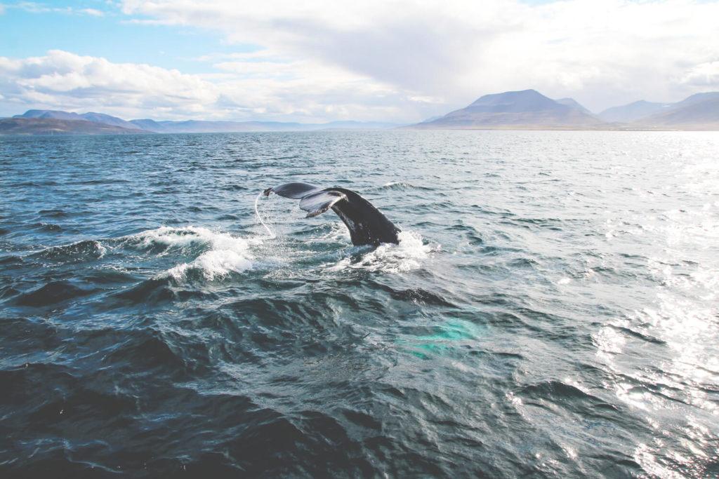 Die besten Dating-Standorte im Norden von Iicheland