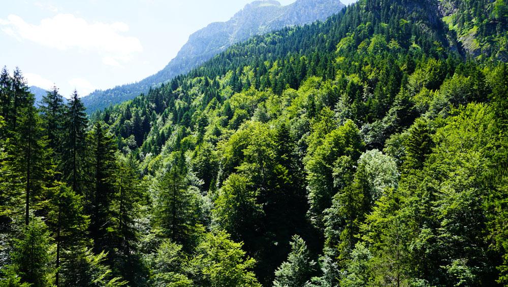 Alpen-Wald-Hohenschwangau-Tegelberg