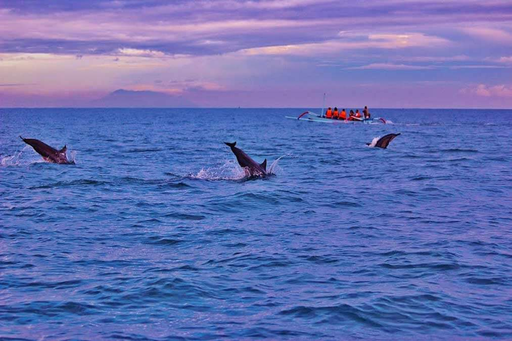 Delfine-Lovina-Bali-Indonesien-Tour-Ausflug-Boot