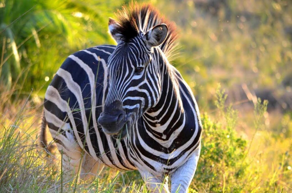 Suedafrika-Highlights-isimangaliso-wetland-park-2