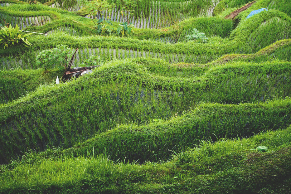 Telalalang-Reisfelder-Ubud-Bali-Indonesien