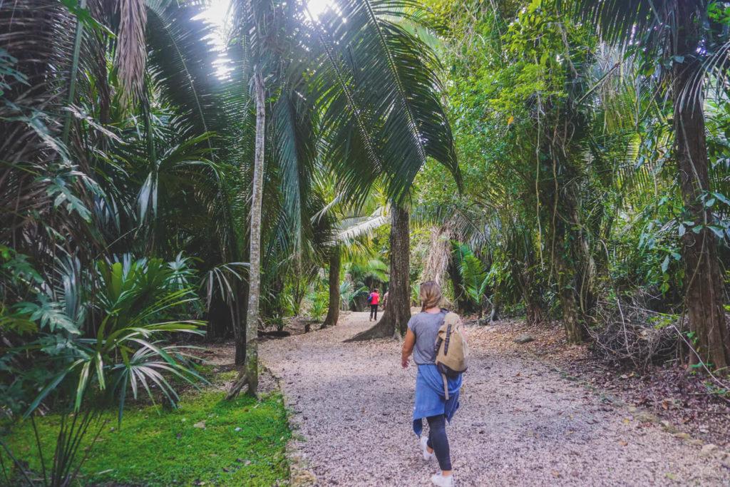 belize-ausfluege-tipps-touren-regenwald