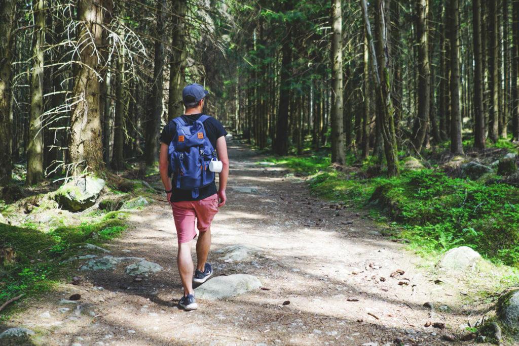 brockenwanderung-harz-nationalpark-wald