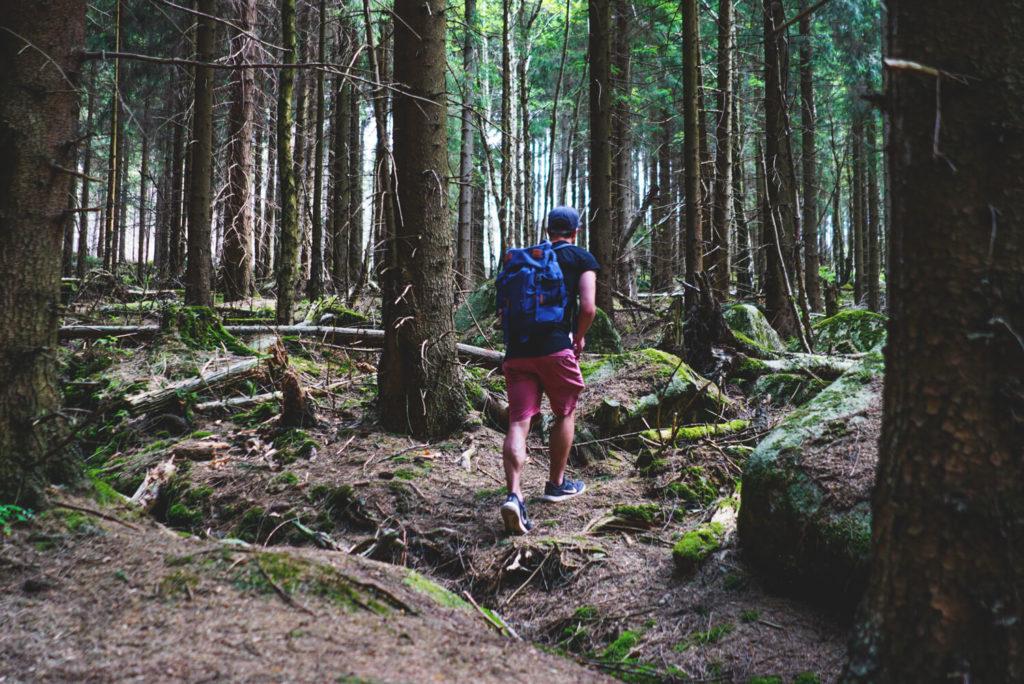 nationalpark-harz-brockenwanderung-wald