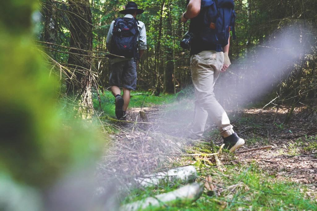 nationalpark-hunsrueck-hochwald-saarland-ranger