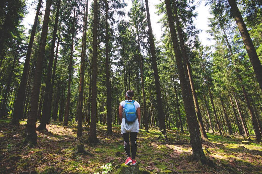 nationalpark-hunsrueck-hochwald-saarland-wald-1