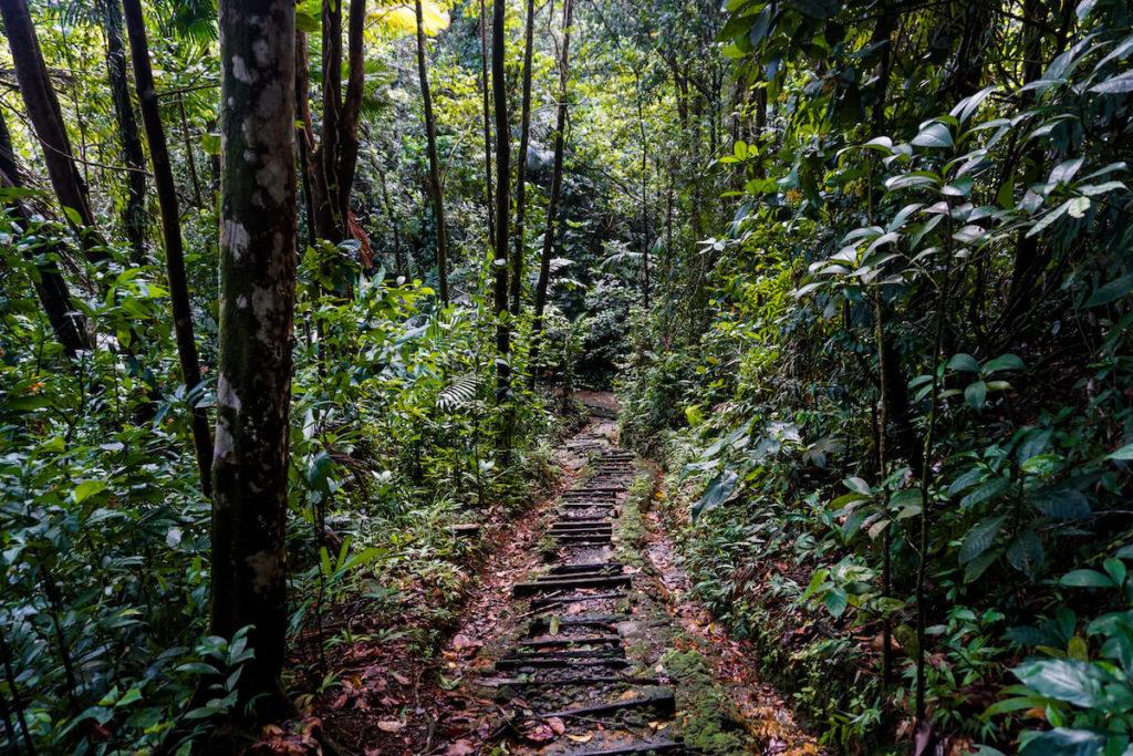 saint-lucia-karibik-wanderung-des-cartiers-trail