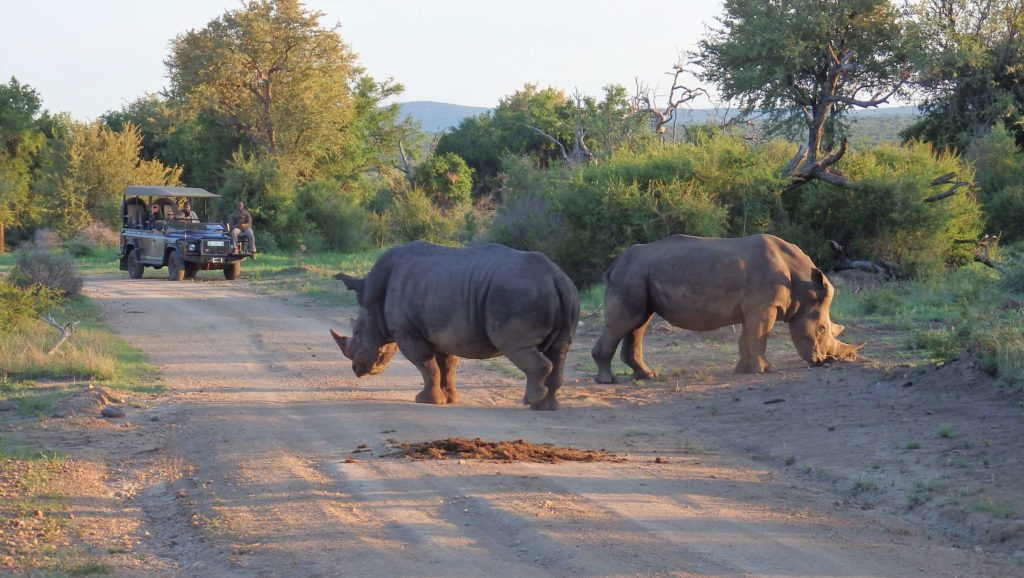 suedafrika-highlights-madikwe-game-reserve-1