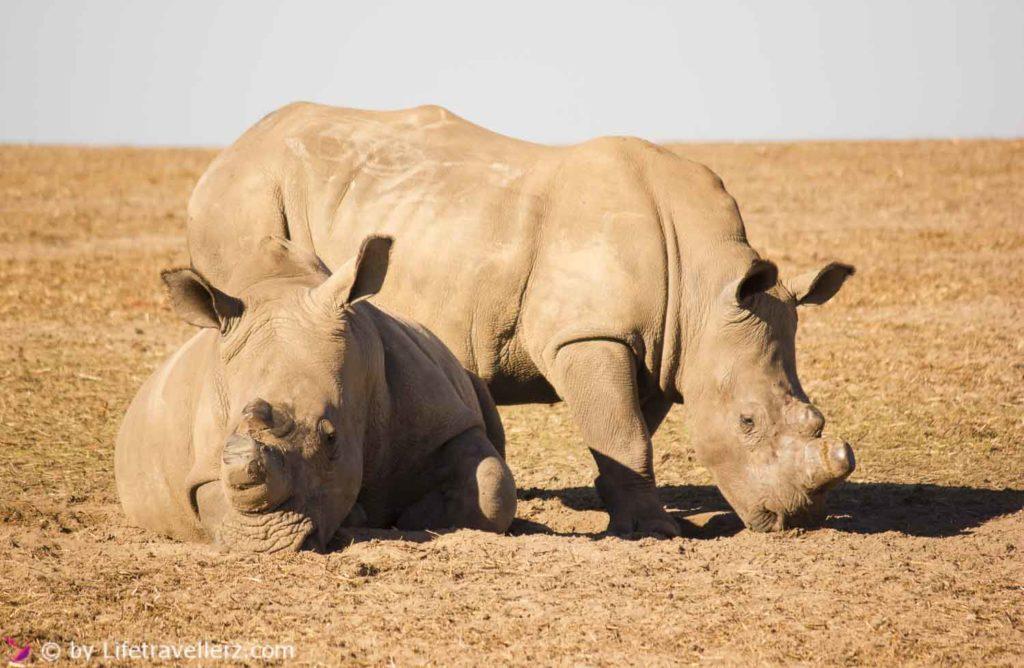 suedafrika-highlights-west-coast-nationalpark