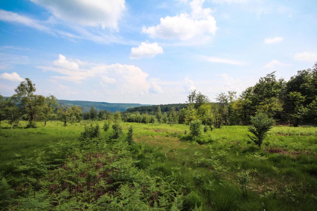 tour-hunsrueck-hochwald-tour-moore