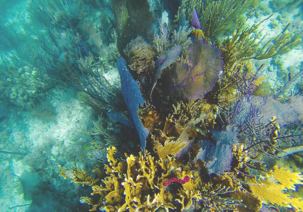 unterwasserwelt-belize-schnorcheln-silk-cayes