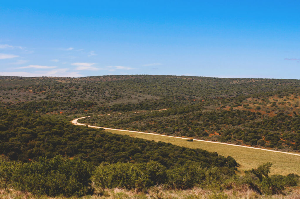 Addo-Elephant-Park-Suedafrika-Aussichtspunkt