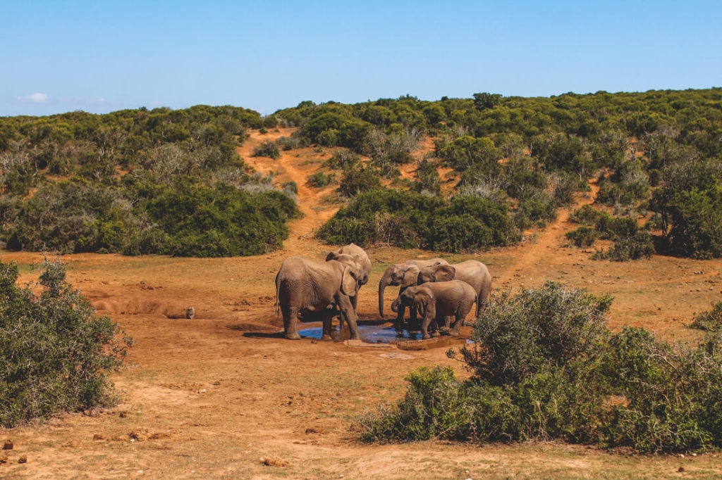 Addo-Elephant-Park-Suedafrika-Elefanten-Familie