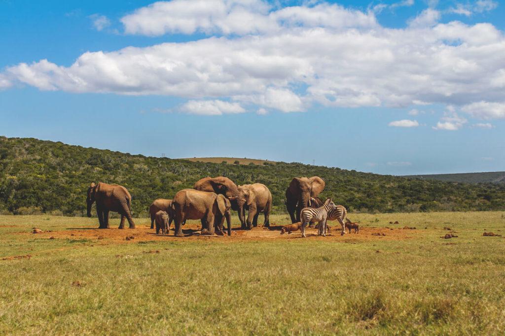 Addo-Elephant-Park-Suedafrika-Elefantenherde-Wasserloch