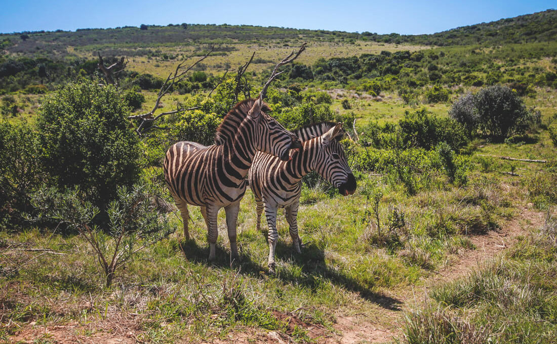 Nationalparks in Südafrika – Unsere Highlights & Tipps