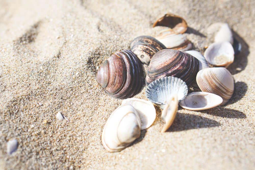 Bloemendaal-Nordsee-Haarlem-Niederlande-Strand-Muscheln
