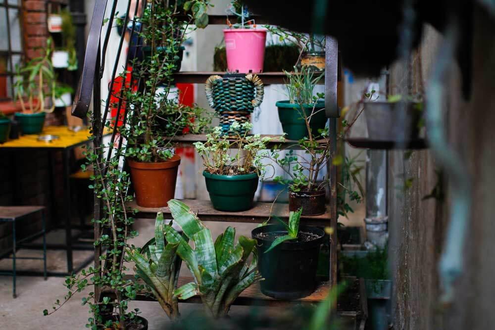 Curiocity-Hostel-Johannesburg-pflanzen