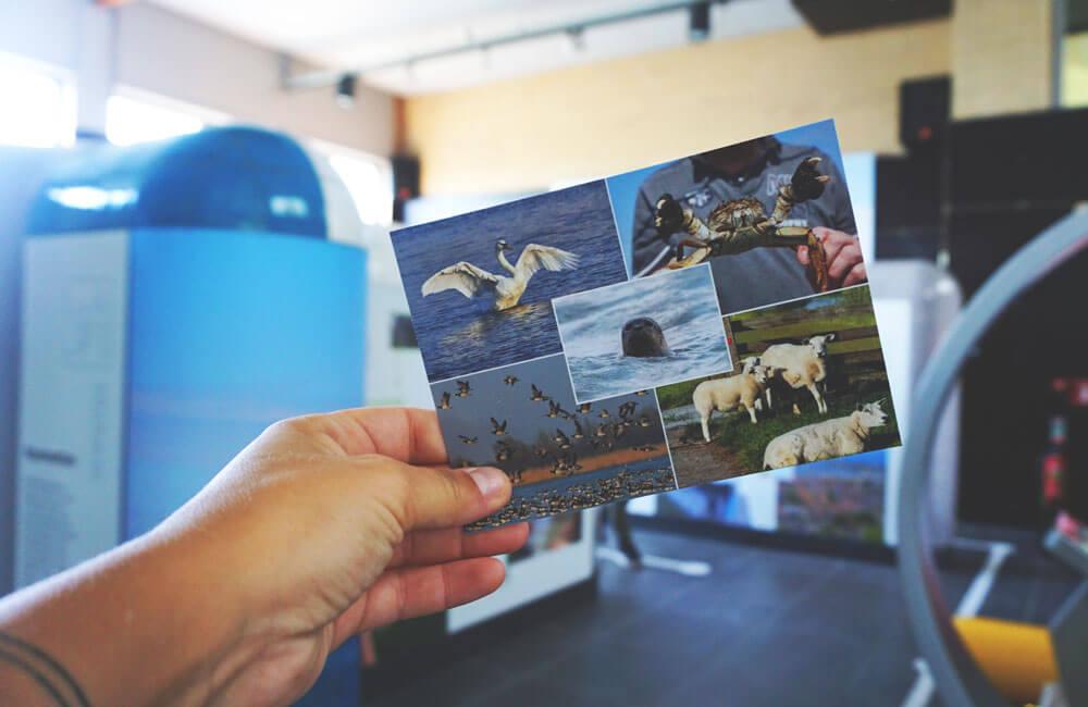 Harlingen-Friesland-Niederlande-Postkarte