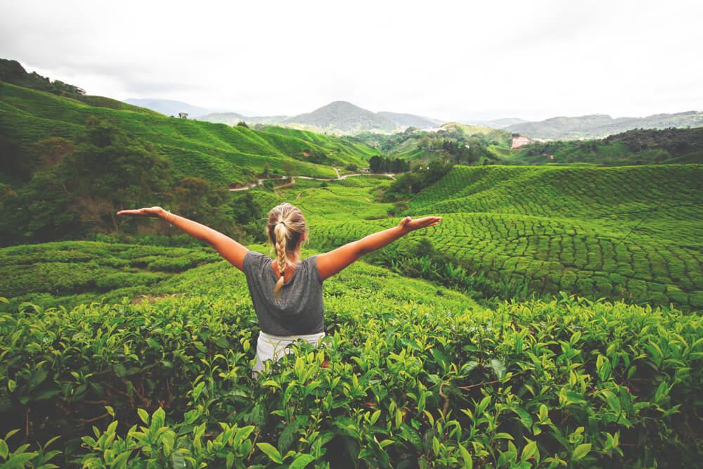cameron-highlands-malaysia-felder-teeplantage-bolle