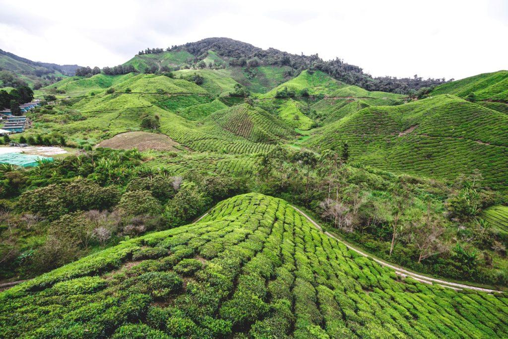 cameron-highlands-malaysia-teeplantagen-min