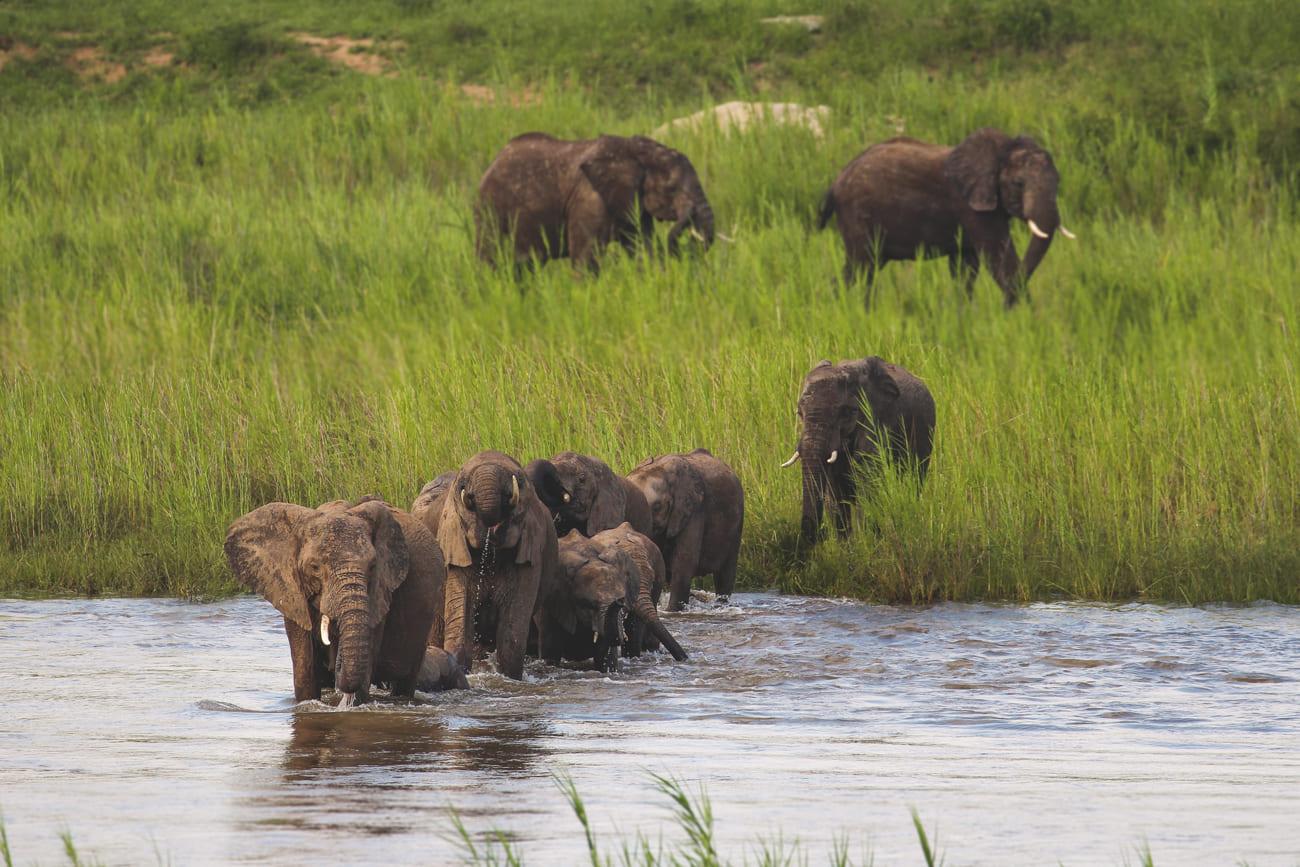 krueger-nationalpark-suedafrika-safari-elefant