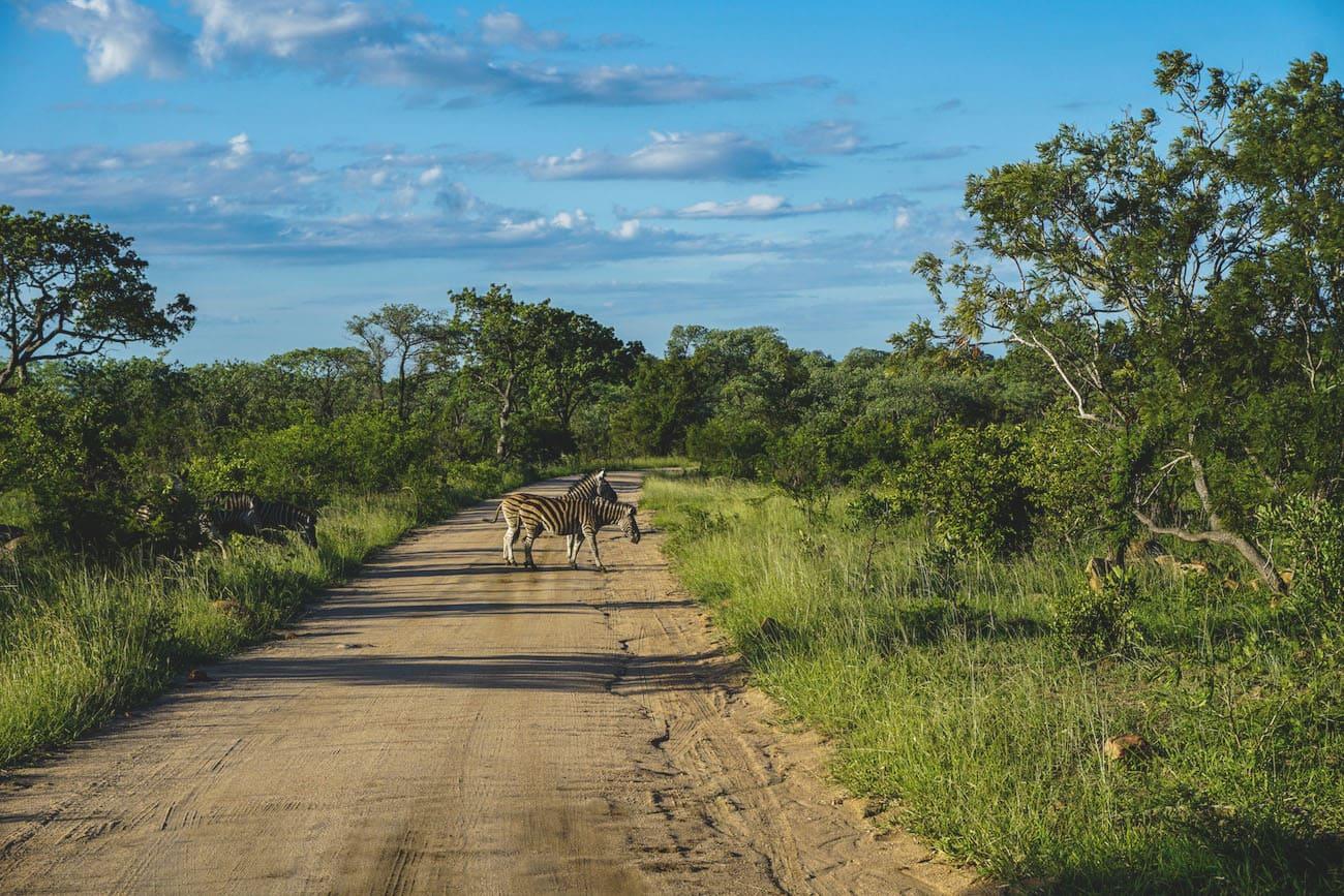 kruger-nationalpark-suedafrika-straßen