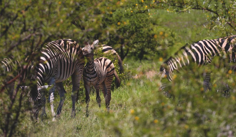 Safari rund um Kapstadt – So erlebst du die Big 5 hautnah