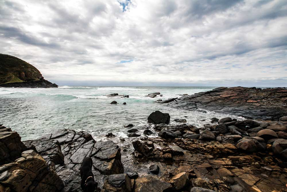 wild-coast-suedafrika-coffee-bay-dolphin