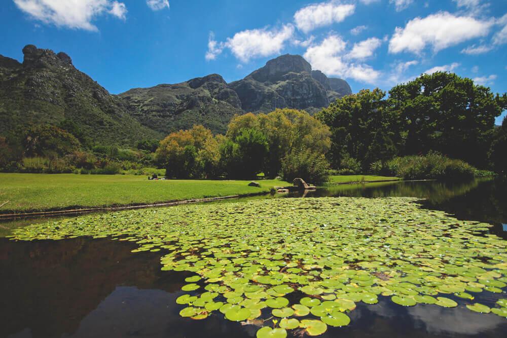 Kirstenbosch-Botanischer-Garten-Kapstadt3
