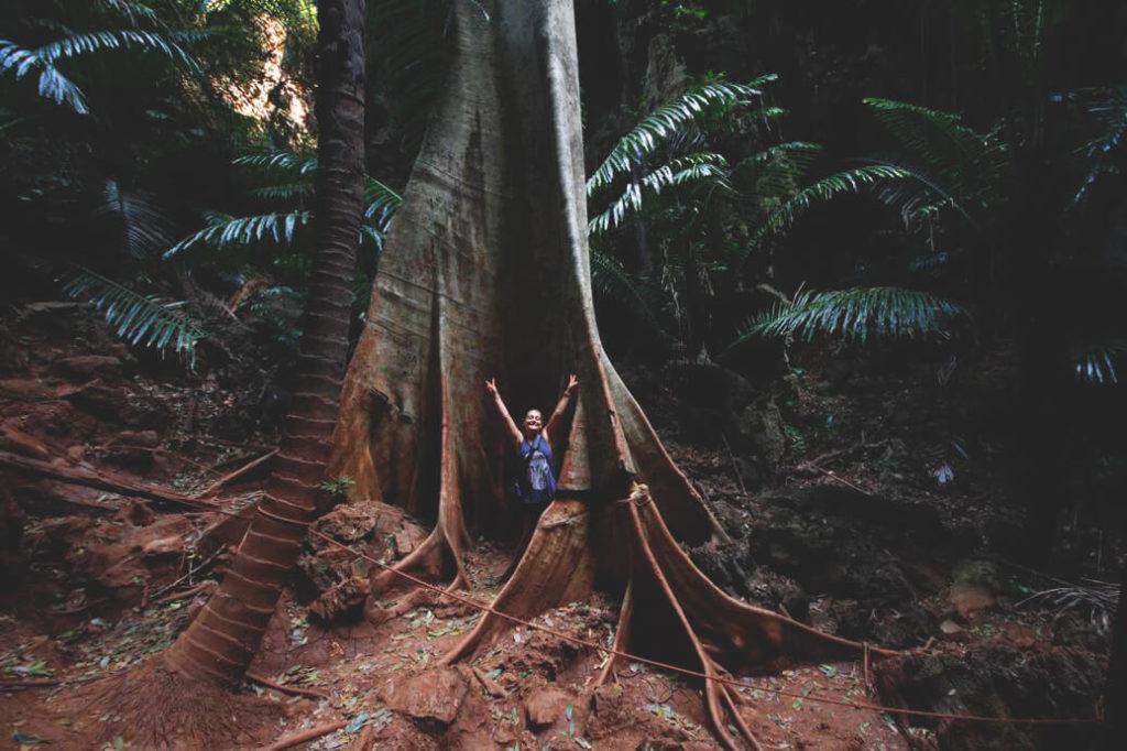 Krabi-Railay-Beach-Lagune-Klettern-Tour-Baum