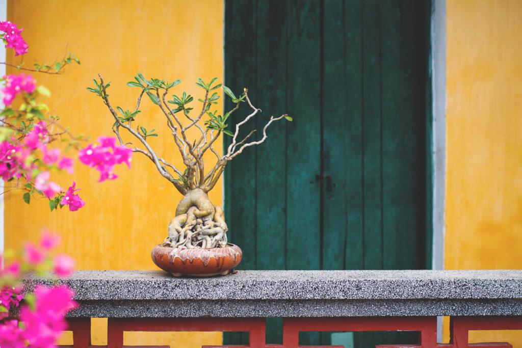 old-houses-hoi-an-vietnam-tipps