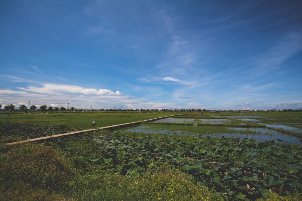reisfelder-hoi-an-vietnam-fahrradtour