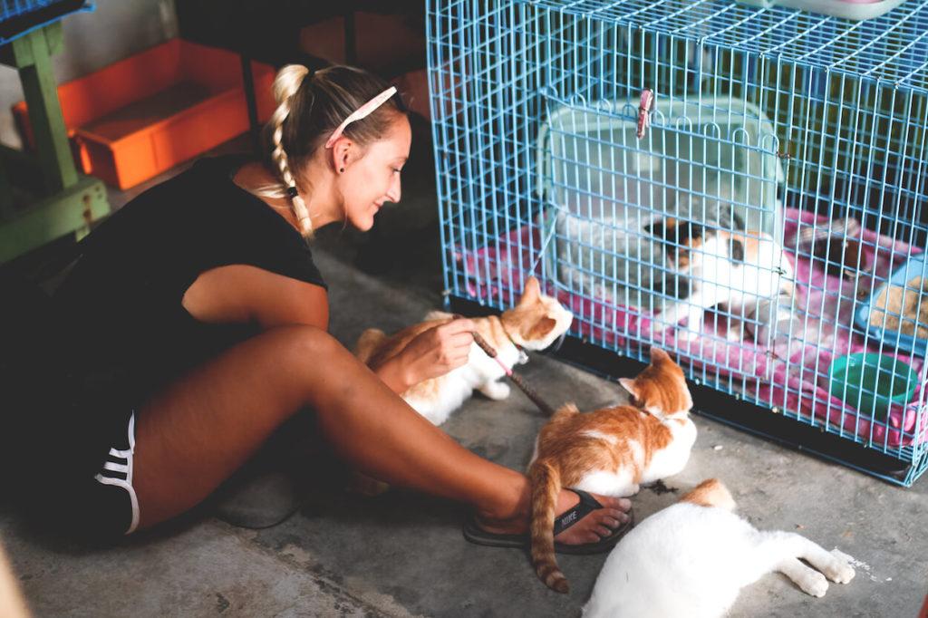 Koh-Lanta-Thailand-Lanta-Welfair-Hunde-Katzen