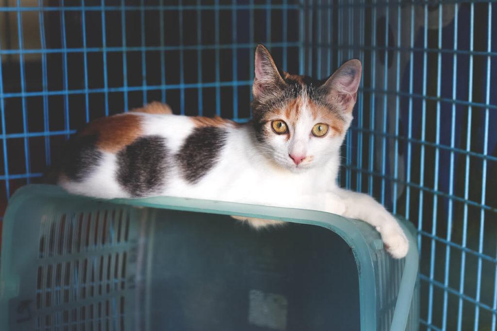 Koh-Lanta-Thailand-Lanta-Welfair-Katze