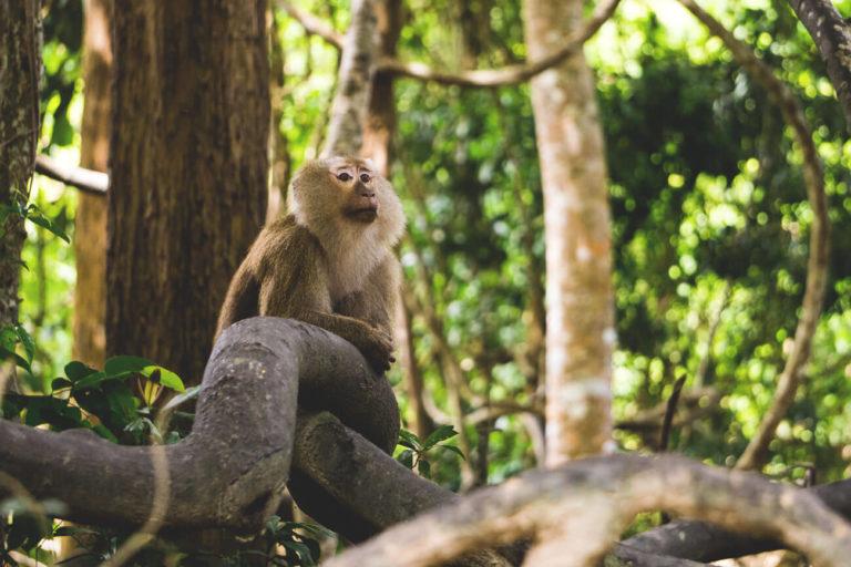 Phuket-Sehenswuerdigkeiten-tipps-highlights-monkey-hill
