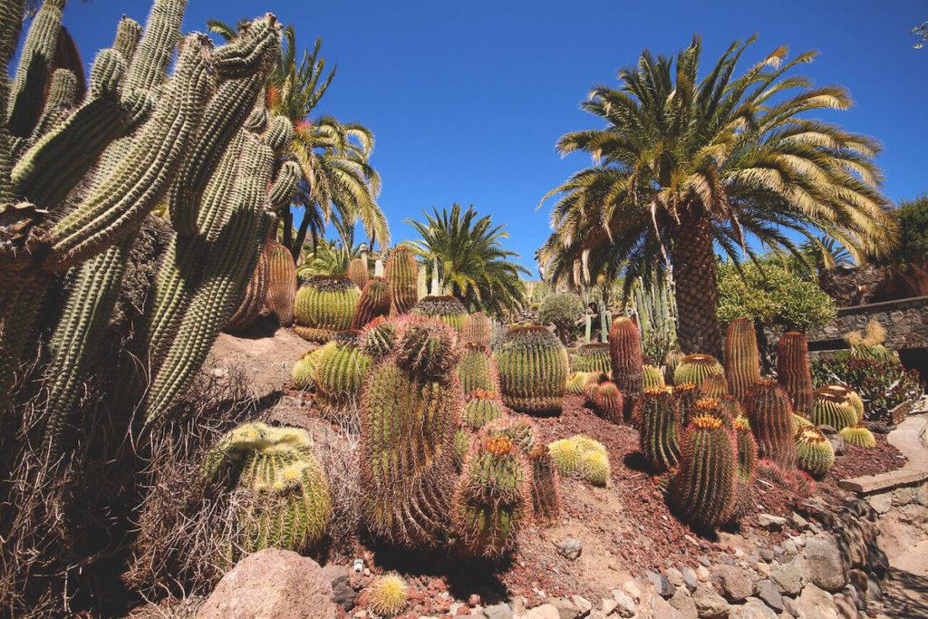 sehenswuerdigkeiten-auf-gran-canaria-cactualdea-park (1) (1)