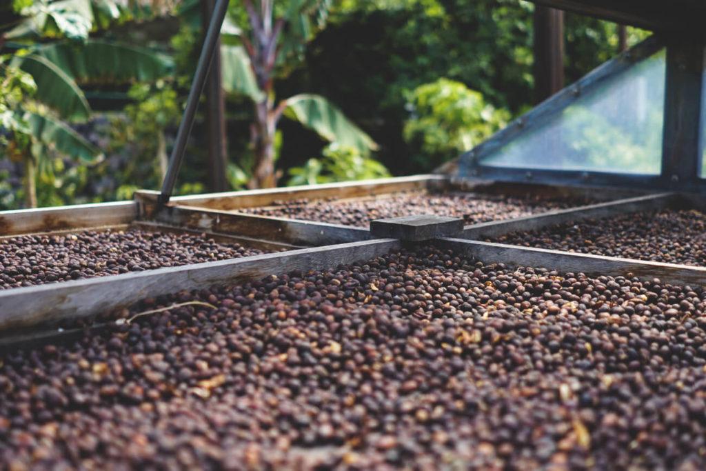 sehenswuerdigkeiten-gran-canaria-los-berrazales-kaffeeplantage