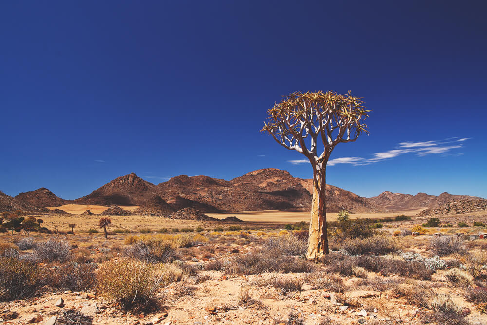 Sehenswürdigkeiten in Südafrika - Kalahari Northern Cape