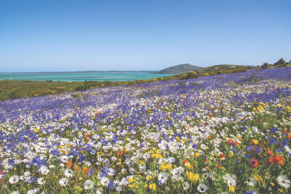 Sehenswürdigkeiten in Südafrika - West Coast National Park