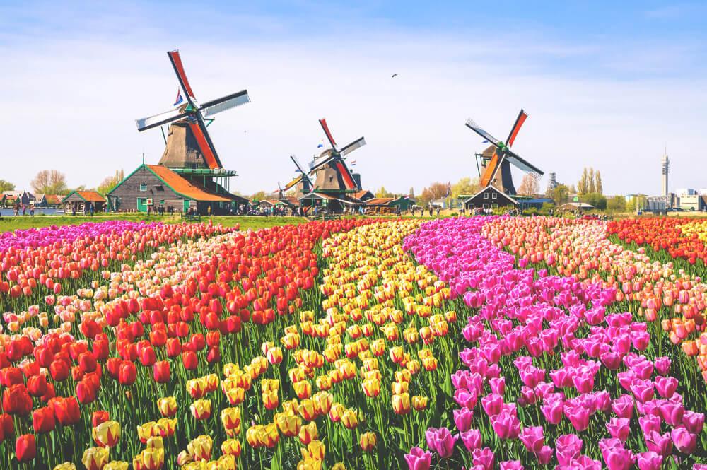 Amsterdam-Sehenswuerdigkeiten-Ausflug-Zaanse-Schans-Windmuehle