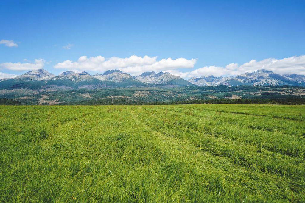 Auf dem Weg zum Štrbské Pleso in der Hohen Tatra