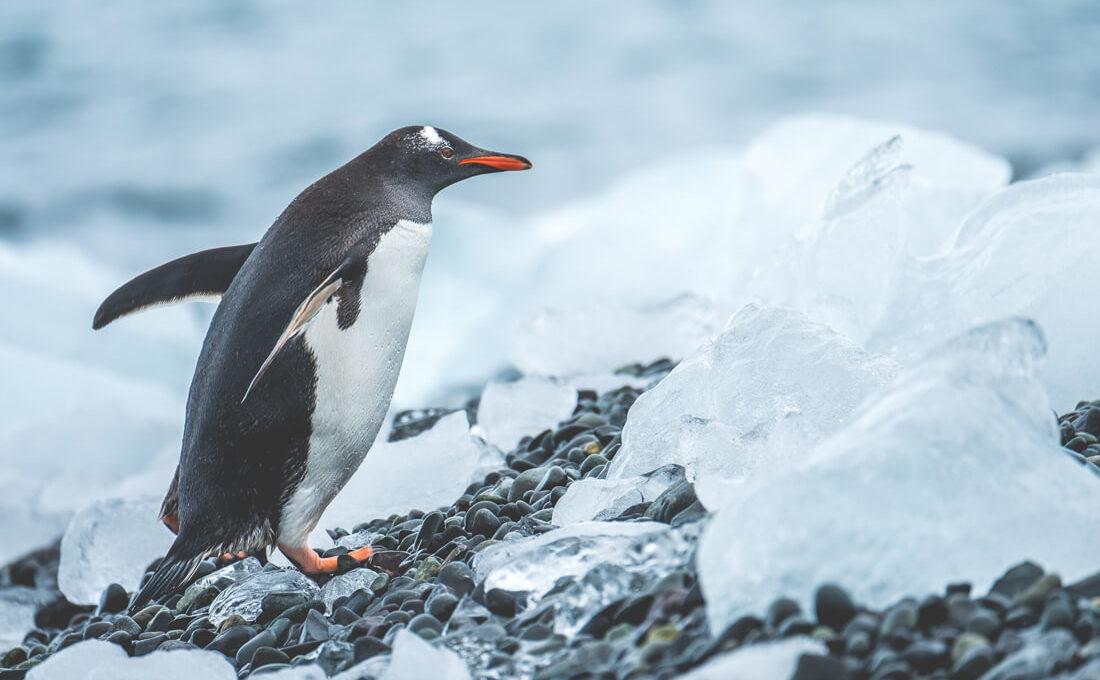 Eine unvergessliche Reise in die Antarktis ans Ende der Welt