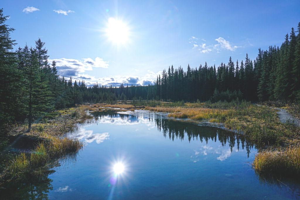 Denali-Nationalpark-Alaska-Highlights