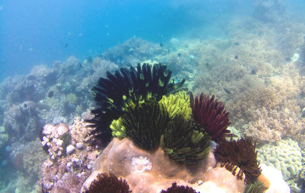 Lombok-Tipps-Gili-Inseln-Schnorcheltour