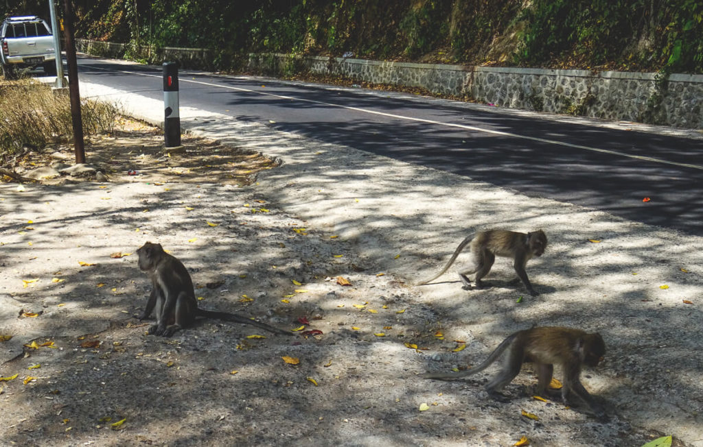 Lombok-Tipps-Monkey-Forest