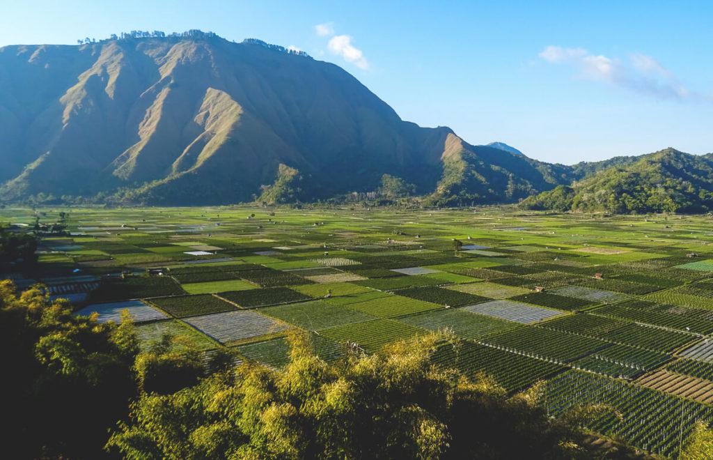 Plantagen-beim-Dor-Lombok-Tippsf