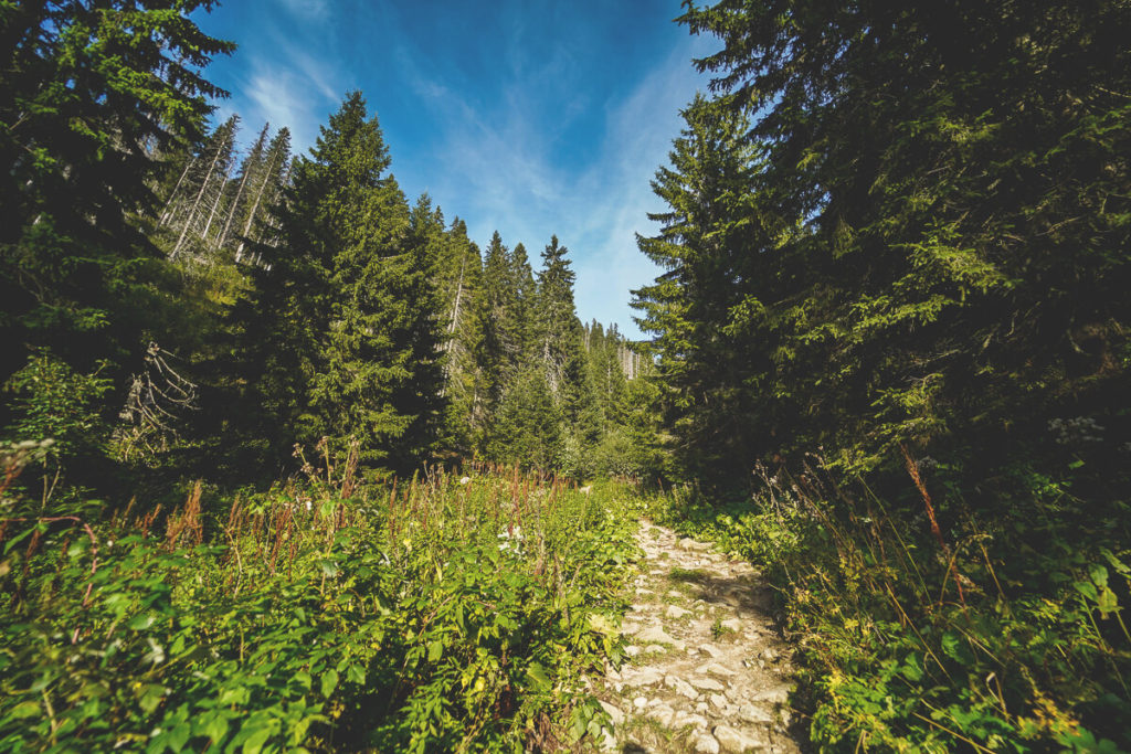 Wanderung-Dumbier-Niedere-Tatra-Abstieg